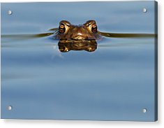 Reflections - Toad In A Lake Acrylic Print