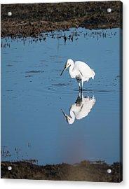 Reflections White Egret Acrylic Print
