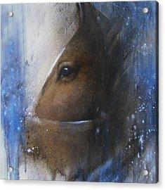 Reflective Horse Acrylic Print by Jackie Flaten