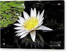 Reflective Lily Acrylic Print