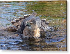 Acrylic Print featuring the photograph Refreshing Bath by Doris Potter