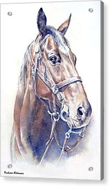 Regal  A Cavalry Horse Portrait Acrylic Print by Barbara Widmann