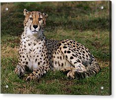 Regal Pose Acrylic Print