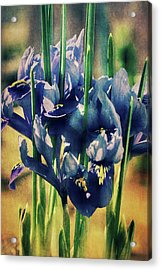 Acrylic Print featuring the photograph Regal Splendour  by Connie Handscomb