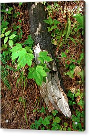 Acrylic Print featuring the photograph Regrowth by Arthur Fix