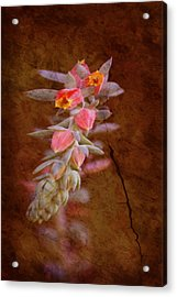 Regrowth Acrylic Print by Holly Kempe