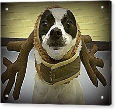 Reindeer Dog Acrylic Print