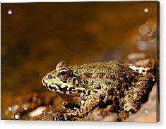 Relaxed Acrylic Print by Richard Patmore