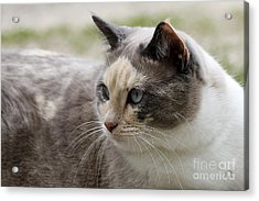 Acrylic Print featuring the photograph Relaxed by Teresa Zieba