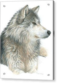 Relaxing Wolf Acrylic Print