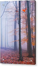 Acrylic Print featuring the photograph Remaining Yellow 2 by Rima Biswas