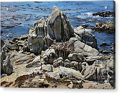Acrylic Print featuring the photograph Remains Of Ancient Rocks At Carmel Point by Susan Wiedmann