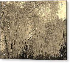 Remember Our Willow Acrylic Print by Mary Zeman