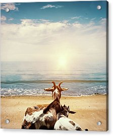 Remember This Day Acrylic Print by Wim Lanclus