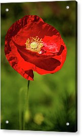 Remembering Acrylic Print