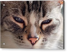 Remi Cat Acrylic Print