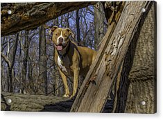 Remy In Tree Oil Paint More Pop Acrylic Print