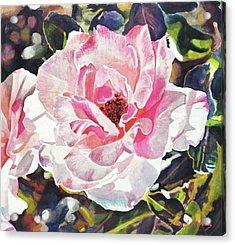 Renaissance Rose Blossom Acrylic Print