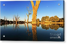 Acrylic Print featuring the photograph Renamrk Murray River South Australia by Bill Robinson