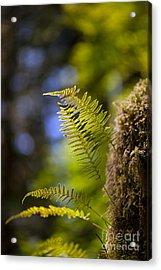 Renewal Ferns Acrylic Print by Mike Reid