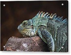 Reptile Acrylic Print by Daniel Precht