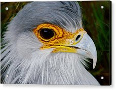 Reptile Hunter - Secretary Bird Acrylic Print