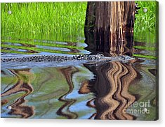 Acrylic Print featuring the photograph Reptile Ripples by Al Powell Photography USA