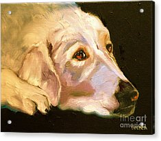 Rescued Golden Acrylic Print by Susan A Becker
