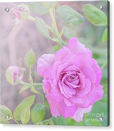 Acrylic Print featuring the photograph Resilient Rose by Cindy Garber Iverson