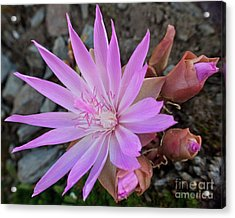 Resiliently Delicate Acrylic Print