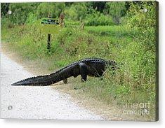 Respect Wildlife Large Gator Acrylic Print