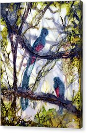 Resplendent Quetzal #1 Acrylic Print