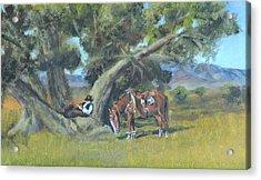 Resting Cowboy Painting A Study Acrylic Print