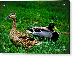 Acrylic Print featuring the photograph Resting Ducks by Mariola Bitner