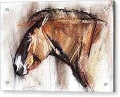 Resting Horse Acrylic Print