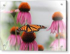 Resting Monarch Acrylic Print by Yumi Johnson