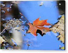 Acrylic Print featuring the photograph Resting On Gold And Blue by Doris Potter