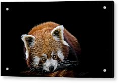 Restless Acrylic Print by Paul Neville