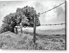 Restricted Acrylic Print