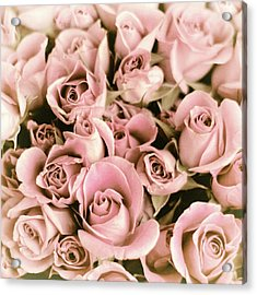 Reticent Rose Acrylic Print by Jessica Jenney