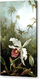 Retouched Masters - Orchid And Hummingbirds In Tropical Forest Acrylic Print