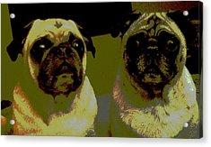 Retro Pugs Acrylic Print by HP Hwang