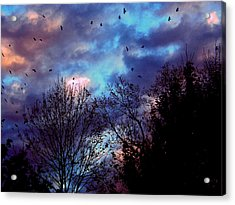 Return Of The Crows Acrylic Print by Martin Morehead