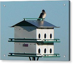 Return Of The Purple Martin Acrylic Print by Jerry Browning
