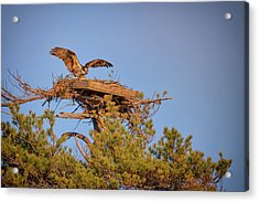 Acrylic Print featuring the photograph Returning To The Nest by Rick Berk