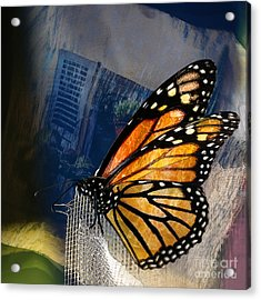 Reve De Papillon  Acrylic Print by Variance Collections