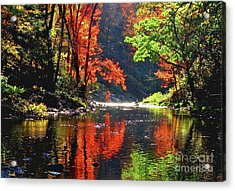 Revealed Acrylic Print by Sheila Ping