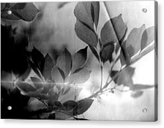 Revel Acrylic Print