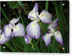 Acrylic Print featuring the photograph Rhapsody by Marie Hicks