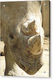 Rhino Closeup Acrylic Print by George Jones